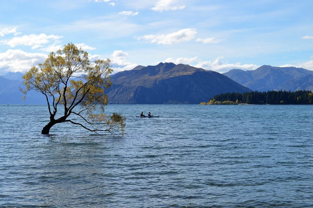 lac Wanaka lone tree